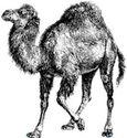 Úvod do programovacího jazyka Perl + stažení