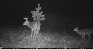Najděte nejlepší způsob, jak pozorovat divoká zvířata