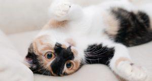 Jak přizpůsobit domácnost pro kočku?